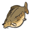 ico-carp